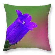 Purple Canterbury Bell Throw Pillow
