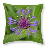 Purple Centaurea Montana Flower Throw Pillow