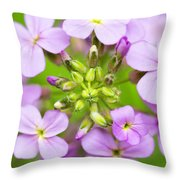 Purple Circle Of Dames Rocket Phlox In Spring Garden Throw Pillow