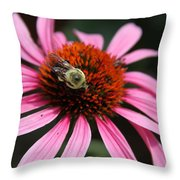 Purple Cone Flower 3 Throw Pillow