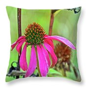 Purple Coneflower Along White Pine Trail In Kent County, Michigan  Throw Pillow