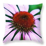 Purple Coneflower Close-up Throw Pillow
