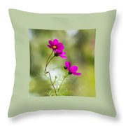 Purple Cosmos Flowers Square Throw Pillow