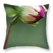 Purple Dahlia Flower Bud Throw Pillow