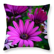 Purple Daisies Throw Pillow