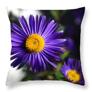 Purple Daisy Throw Pillow by Yew Kwang