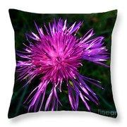 Purple Dandelions 4 Throw Pillow