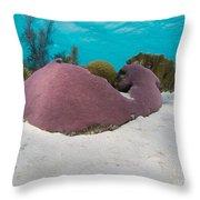 Purple Doze  Throw Pillow