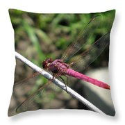 Purple Dragon Throw Pillow