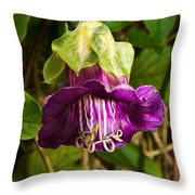 Purple Flower Of The Vine Known As Cathedral Bells Throw Pillow