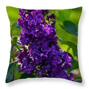 Purple French Lilac Throw Pillow