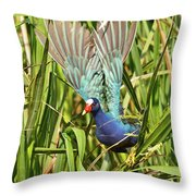 Purple Gallinule In Flight Throw Pillow