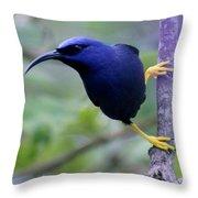 Purple Honeycreeper Throw Pillow
