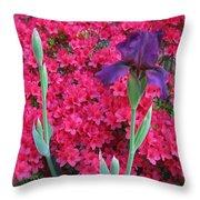Purple Iris In Pink 2  Throw Pillow