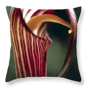 Purple Jack In Pulpit Throw Pillow