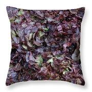 Purple Lettuce   Corsica Throw Pillow