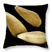 Purple Loosestrife Seeds, Sem Throw Pillow