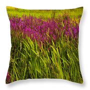 Purple Loosetrife And Cat-tails Throw Pillow