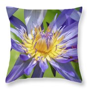 Purple Water Lily Flowers Blooming In Pond Throw Pillow