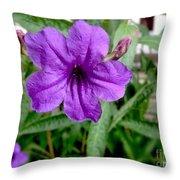 Purple Mexican Petunia Throw Pillow