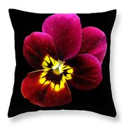 Purple Pansy On Black Throw Pillow
