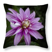 Purple Pink Dahlia Throw Pillow