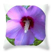 Purple Rose Of Sharon In Circle Frame Throw Pillow