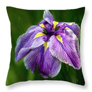 Purple Siberian Iris Flower Closeup Throw Pillow