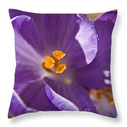 Purple Spring Crocus Throw Pillow