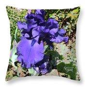 Purple Springtime Iris  Throw Pillow