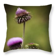 Purple Star Thistle Throw Pillow
