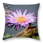 Purple Star Water Lily Throw Pillow