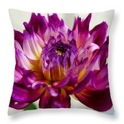 Purple Sunset Flower 1 Throw Pillow