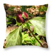 Purple Trillium Throw Pillow