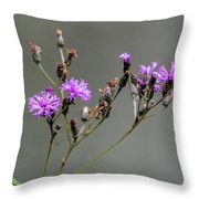Purple Wildflower In Shiloh National Military Park, Tennessee Throw Pillow