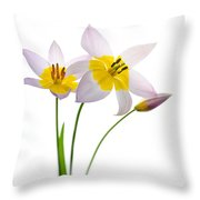Purple Yellow Tulips 1 Throw Pillow