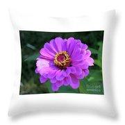 Purple Zinnia  Throw Pillow