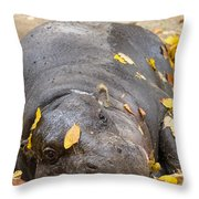 Pygmy Hippopotamus 1 Throw Pillow