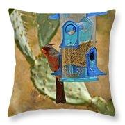 Pyrrhuloxia Swinging On The Feeder Throw Pillow