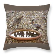 Quail Family Gathering Az Throw Pillow
