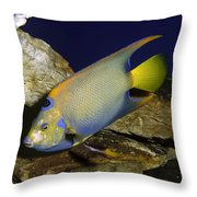Queen Angelfish Throw Pillow