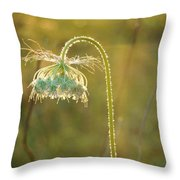Queen Anne's Lace In Evening Throw Pillow