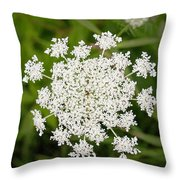 Queen Anne's Lace No 2 Throw Pillow