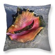 Queen Conch Peeking  Throw Pillow