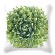 Queen Victoria Agave Succulent Throw Pillow