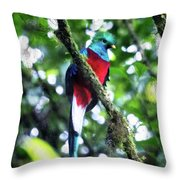 Quetzal In Monteverde Throw Pillow