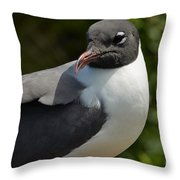 Quiet Laughing Gull Throw Pillow