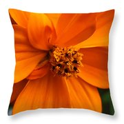 Quiet Passenger Throw Pillow