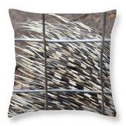 Quills Of An African Porcupine Throw Pillow