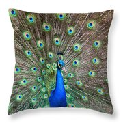 Quite A Display Throw Pillow